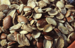 Dika Nuts - semillas del mango africano