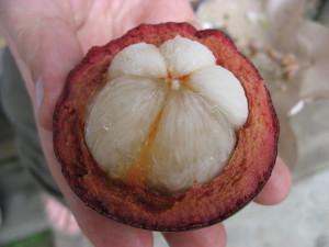 Manogostan – Garcinia Cambogia