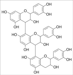 Proantocyjanidyny