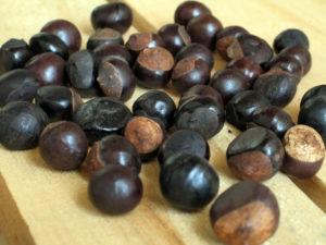 guarana - nasiona