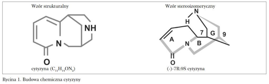 Budowa chemiczna cyztyzyny