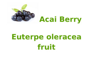 Acai Berry (Euterpe oleracea fruit)