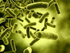 Bakterie zamiast konserwantów