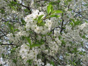 Aromaterapia na wiosnę