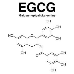 Galusan epigallokatechiny (EGCG)