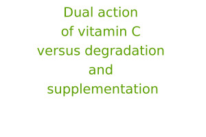 Dual action of vitamin C versus degradation and supplementation
