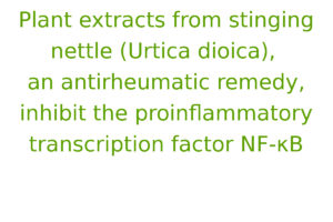 Plant extracts from stinging nettle (Urtica dioica), an antirheumatic remedy, inhibit the proinflammatory transcription factor NF-κB