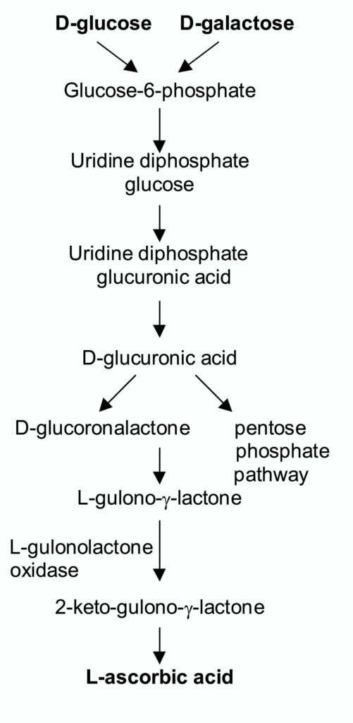 Figure 1 Biosynthesis of L-Ascorbic acid in animals