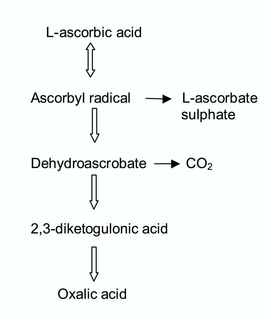 Figure 2 Catabolism of Ascorbic acid