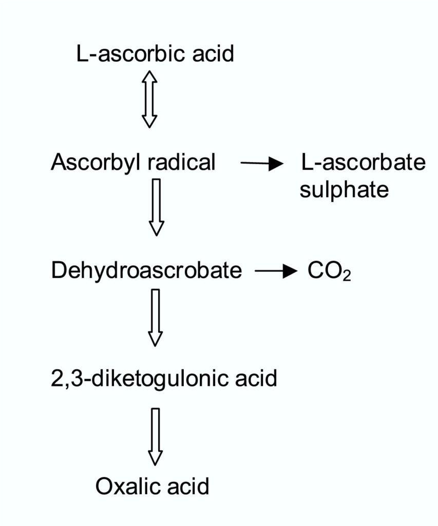 Figure 2 Catabolism of Ascorbic acid