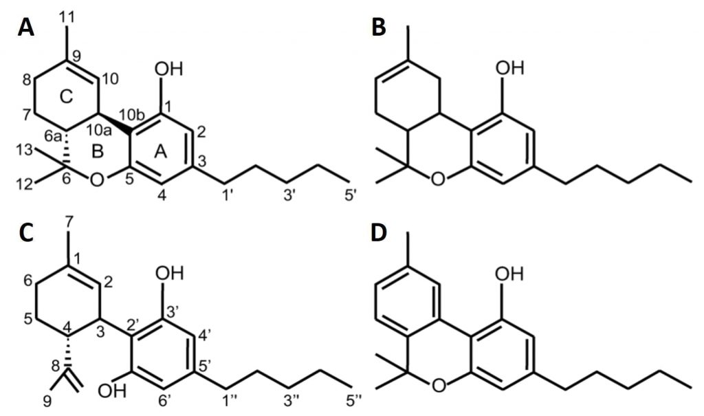Fig. 1. The chemical structure of main cannabinoids present in Cannabis