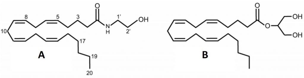 Fig. 2. The chemical structures of endocannabinoids
