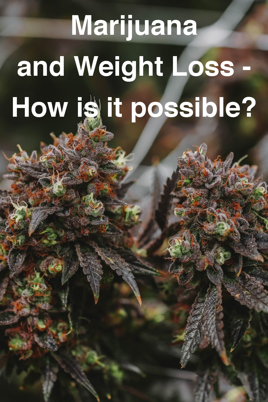 Marijuana and Weight Loss - How is it possible?